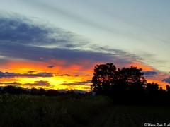 Beautiful sunset tonight! (Paolo Gabriele Maiero) Tags: sunset sky panorama tree primavera nature clouds landscape countryside spring tramonto nuvole colours ngc natura campagna cielo colori orizzontale pianteefiori
