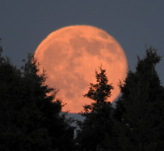 Summer Solstice Strawberry Full Moon - Chippewa County - Upper Peninsula - Michigan (Mikel Classen) Tags: strawberry michigan fullmoon solstice upperpeninsula chippewacounty