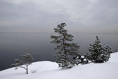 1935 (Mikael Laaksonen Photography) Tags: sea pine