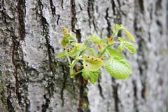 IMG_4611 (Irina Souiki) Tags: parcdesceaux france paris sceaux flowers nature parc park
