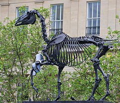 Gift Horse by Hans Haacke (pjpink) Tags: uk england sculpture horse london art skeleton spring britain may trafalgarsquare 2016 haacke hanshaacke gifthorse 4thplinth pjpink forthplinth