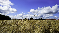 Jour 43 (eaquinocifuentes) Tags: france primavera azul sony paisaje ciel cielo campo francia z3 xperia