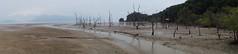 Desolate beach panorama (quinet) Tags: panorama beach strand sarawak malaysia borneo plage kuching deadtrees 2015 bakonationalpark totebume arbresmorts