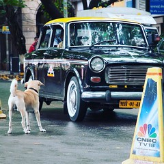 Original pic here : http://ift.tt/294sqnk (topcao) Tags: instagram  india journey  i think this dog wants take cab  travel traveling igindia vacation visiting instatravel instago instagood trip holiday photooftheday fun travelling tourism tourist instapassport instatraveling mytravelgram travelgram travelingram igtravel mumbai delhi rajasthan love beautiful happy amazing summer