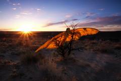 an alternate mesa (johngpt) Tags: sunset composite clouds photomanipulation butterfly sunburst sunrays contrejour hss westmesa cumulushumilis ndgradfilters sliderssunday fujinonxf1855mmf284rlmois fujifilmxt1