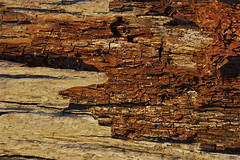 Half revealed - Natural patterns series (Steve Attwood) Tags: wood red newzealand nature canon silver log pattern trunk rata greymouth naturalpattern