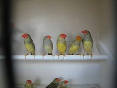 Little birds in Paris