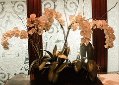 """orchids-glass • <a style=""""font-size:0.8em;"""" href=""""http://www.flickr.com/photos/35224675@N06/8807286732/"""" target=""""_blank"""">View on Flickr</a>"""