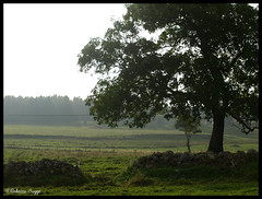 The tree (DameBoudicca) Tags: wood tree forest skne sweden schweden meadow wiese bosque skog rbol sverige prado prairie albero wald arbre prato baum fort trd suecia sterlen foresta sude svezia ng kard