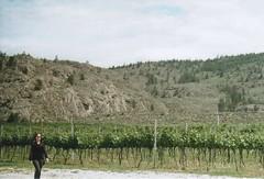 Sarah, Hester Creek (gunstreet.girl) Tags: film sarah 35mm vineyard oliver pentax kodak hestercreek kodakgc200