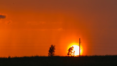 209 - Fire on the horizon (esmccrory) Tags: sunset orange west tree power telephone horizon pole 365 striking bold empod 500px ifttt