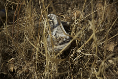 (Caitlin H. Faw) Tags: light shadow color abandoned trash canon landscape shoe eos israel garbage industrial jerusalem may area heels 5d industrialzone yerushalayim markiii talpiot 2013 caitlinfaw caitlinfawphotography
