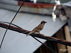 Bird's eye view. (Jhonn Robert) Tags: philippines manila filipino photooftheday picoftheday pinoyphotography samsungcamera proudpinoy samsungwb100 jhonnrobet