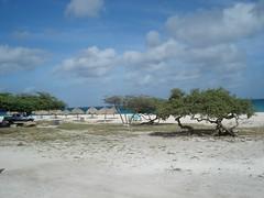 DSC03501 (FengZeTian) Tags: beach carribean aruba naturalbridge netherland catus antilles fancyfeast donkeysanctuary ostrichfarm