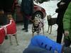 HornPond01-30-2011039