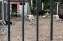 DSC_1347 (Photographer with an unusual imagination) Tags: ukraine kharkov kharkiv    kharkivoblast
