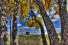 Autumn View (H.B. Mejia) Tags: autumn trees canada clouds barn rural spectacular colorful rustic sunny autumncolours alberta windswept stunning blueskies grainbarn autumnskies autumnweather ruralalberta stunningphotography spectacularphotography