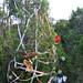 Trees_of_Loop_360_2013_001