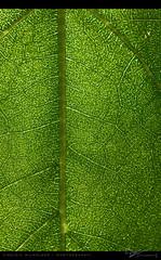Pattern (Virginia Wilhelmer) Tags: life light shadow summer plant alps flower color colour nature beauty leaves sunshine animal insect austria daylight tirol pretty blossom tyrol