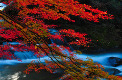 Leaves and water flow (Yohsuke_NIKON_Japan) Tags: autumn red fall nature water japan 35mm river nikon shimane 1208 okuizumo 島根 d300s 奥出雲
