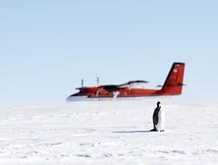Emperor Penguins (Christopher.Michel) Tags: ale ani emperorpenguins gouldbay antarcticlogistics