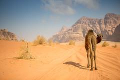 Wadi Rum - Jordan (Timothee M.) Tags: red rouge sand desert wadirum sable jordan camel 5d lawrenceofarabia canonef2470mmf28lusm jordanie dsert timothe dromadaire 2470mm 2470mmf28 lawrencedarabie mirabaud canon5dmarkiii 5dmark3 timothem