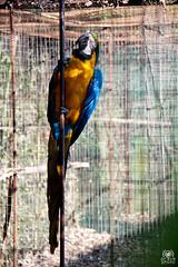 Oasi di Sant'Alessio (andrea.prave) Tags: park parco bird nature animal fauna pssaro natura oiseau animali vogel pjaro uccello santalessio pavia  ku alessio oasi       pravettoni andreapravettoni andreaprave