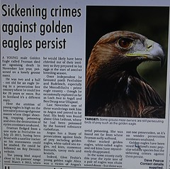 letter on crime against golden eagle Aquila chrysaetos (BSCG (Badenoch and Strathspey Conservation Group)) Tags: ea raptor poison eagle priority cairngorms conservation letter angus grouse moor alma fearnan persecution wildlife crime illegal hare male young managers