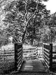 Tree and Bridge 4 (Black and White) (Bill M9) Tags: bridge trees white black perthshire loch leven