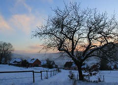 Mist is falling. Night is coming ... (:Linda:) Tags: baretree snow appletree schnee germany thuringia village bürden sky woodenfence dusk twilight mist apfelbaum cloudysky