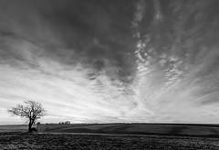 Winter Dawn (Lee532) Tags: bw white black tree clouds landscape dawn nikon sigma 1020mm d5100