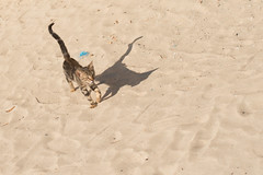 Cat, sand and shadow