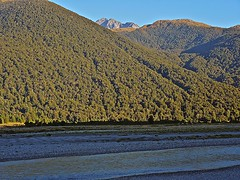 Cloak of Trees (Deepgreen2009) Tags: trees newzealand mountains forest river evening high covered southisland cloaked