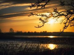 Februar (dubdream) Tags: ocean winter sunset sea sky cloud sun tree reed water germany landscape balticsea panasonic schleswigholstein colorimage grosenbrode dubdream dmcgx7