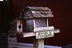 Beware (hashtagtimmyf) Tags: house west bird squirrel texas beware attack feeder monahans