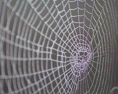 109# Charlottes Web (Illustrate a Childrens Book Title) (thorburns) Tags: detail water canon spider web group silk sparkle dew delicate magical beginner 114 2014 114in2014 commentspleasetohelpmeimprove