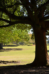 Nara Tree Trunk (pokoroto) Tags: autumn tree japan october trunk  nara kansai 2014 10    naraprefecture  kannazuki   themonthwhentherearenogods 26