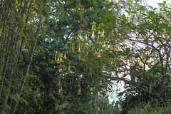 DSC_0176 (Kaitlin Elise) Tags: florida sarasota botanicalgardens southwestflorida photocreditkaitlindowis