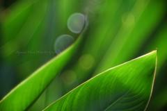 Bokeh and Light  8667 (Raymond Chiok PhotoArt-Graphic) Tags: raymond f28 150mm chiok elmaron photoartgraphic