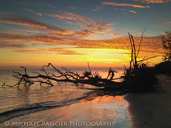 Sunrise at the Bluffs (Michael Pancier Photography) Tags: nature sunrise us unitedstates florida beaches jacksonville bluffs fernandinabeach stgeorgeisland fineartphotography northflorida ameliaisland travelphotography commercialphotography naturephotographer michaelpancier michaelpancierphotography floridastateparks floridaphotography landscapephotographer fineartphotographer michaelapancier bigtalbotstatepark wwwmichaelpancierphotographycom landscaephotography