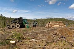 Loggers (mrpb27) Tags: norway forest norge nikon geocaching logging cache machines vestfold kodal mrpb27 18200mmf3556gedifafsvrdx d5200 gcinfo gc6ffj0 stisen