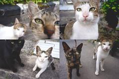 Kumpul Kucing (a.k.a Rujakandroid.) Tags: pet animal cat snapshot