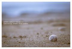 Spring days at the beach (s1nano) Tags: sea sky beach sand dof bokeh shell snail greece thalassa vivitarseries170210f35 kakovatos spring2016