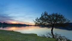 Night and calm (Clear Of Conflict) Tags: sunset naturaleza sun sunlight lake seascape reflection tree sol nature water de landscape lago atardecer agua sundown dusk pantano alava gamboa reflejos trigo ullibarri nanclares