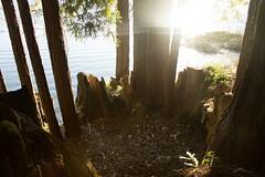 (sweet.disposition) Tags: california santacruz lake water woods reservoir redwoods lochlomond lochlomondlake