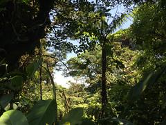 "La Réserve de Monteverde <a style=""margin-left:10px; font-size:0.8em;"" href=""http://www.flickr.com/photos/127723101@N04/26877076731/"" target=""_blank"">@flickr</a>"