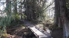 20160331_090257 (ks_bluechip) Tags: creek evans trails preserve sammamish usa2106