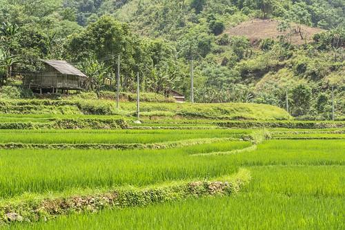 bao lac - vietnam 29