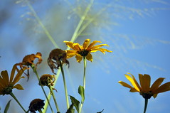 _DSC0019 (Claudio Marcon) Tags: flowerwatcher