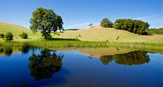 Inland Wetlands (kevinfoxphotography53) Tags: california park photography bay kevin district east fox morgan livermore regional territory 2016 ebparksok